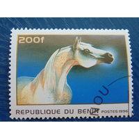 Бенин 1996 г. Фауна.