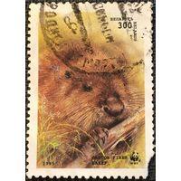 ЦІКАВІЦЬ АБМЕН! 1996, бабёр, 300 руб