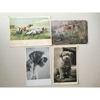 Собаки 1930-1959 года