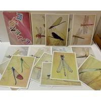 Аристов .Л.В. Набор открыток СТРЕКОЗЫ (В наборе 16 открыток)
