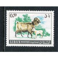 Ливан. Домашние животные. Коза