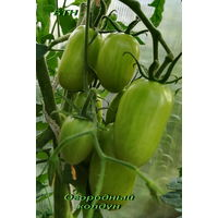 Семена томата Огородный колдун