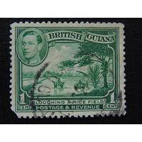 Британская Гайана. Флора.