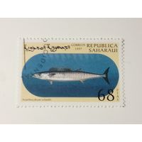 Сахара 1997. Рыбы