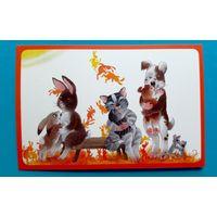 Поздравительная открытка. Кролик. Кот. Собачка. Иллюстрации. Авторская. Латвия.