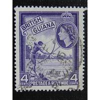 Британская Гайана. Добыча рыбы.