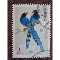 Китай.  Птицы.