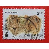Индия 1999 г. Азиатский тигр.