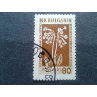 Болгария 1954 цветы