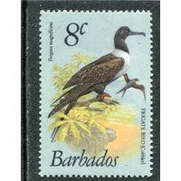 Барбадос. Фрегат великолепный