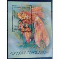 Мадагаскар 1994 Фауна Аквариумные рыбки