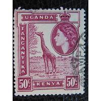 Кения - Уганда - Танганьика 1954г.  Жираф.
