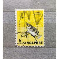 Сингапур.Рыбы.