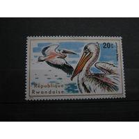 Марка - фауна, птицы, пеликаны, Руанда, 1975