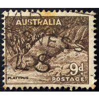 Австралия. Утконос. 1943г. в/з