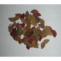 PH-L002Осенняя листва в масштабе  100 шт   1\16-24PANARAMAHOBBY