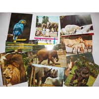 Набор открыток Зоопарк, зарубежные
