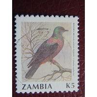 Замбия.  Фауна.