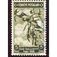 Турция. Оливковое дерево