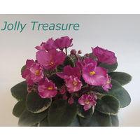 Фиалка полумини Jolly Treasure - розетка взрослая (фото в лоте)