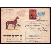 1977 год С.Куприянов Лошадь