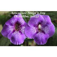 Ахименес Serge s Joy (S.Saliba, 2013)