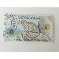 Монголия 1985. Снежный барс