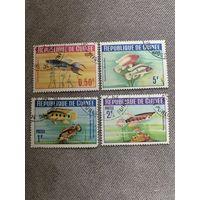 Гвинея. Аквариумные рыбки