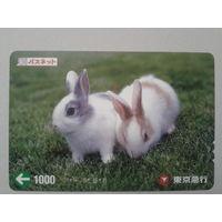 Япония кролики
