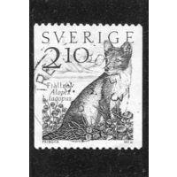 Швеция. Полярная лисица