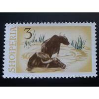 Албания 1965 буйволы