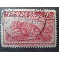 Конго 1942 колония Бельгии леопард
