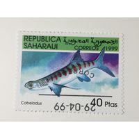 Сахара 1999. Рыбы
