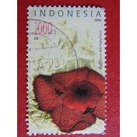 Индонезия 2002г. Микрофлора.