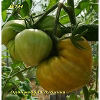Семена томата Оранжевая клубника