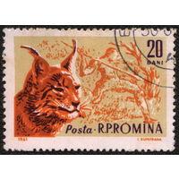 Кошки. Румыния 1961. Рысь. Марка из серии. Гаш.