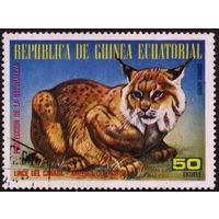 Кошки. Экваториальная Гвинея 1977. Рысь канадская. Марка из серии. Гаш.