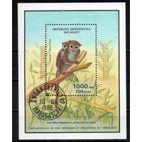 Обезьяны Зоопарк Мадагаскар 1988 год 1 блок