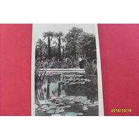 Крым Никитский Ботанический Сад  1951 год